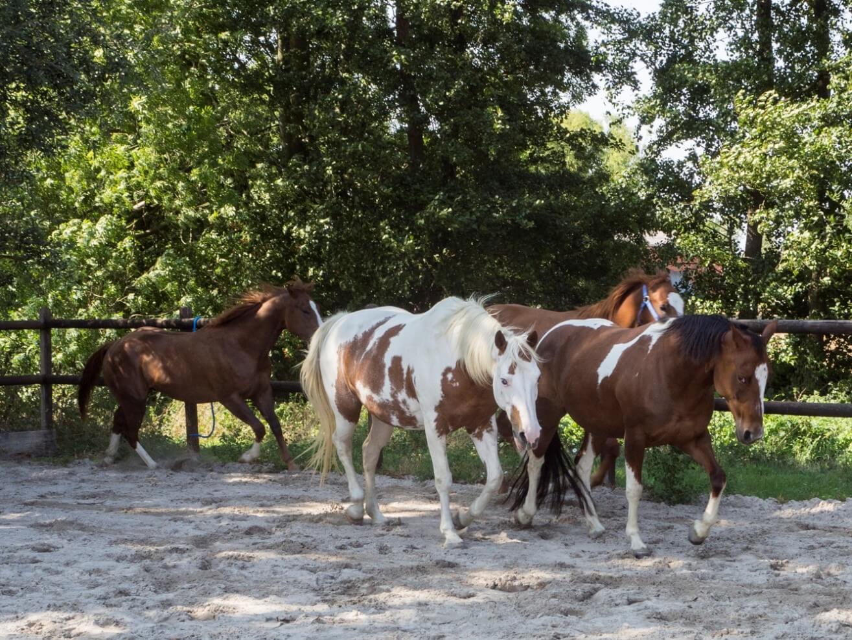 Co-Trainer Pferde, Pferdecoaching, Führungskräftetraining