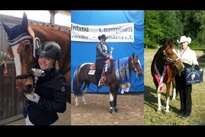 Einzelcoaching Mentaltraining für (Turnier-)Reiter (ohne Pferd)