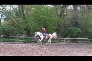 Einzelcoaching Angst-Reittraining mit Pferd