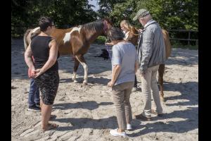 Veränderungen- mit Pferdestärken erleben