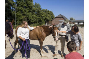 Pferdefluestern für den Hausgebrauch