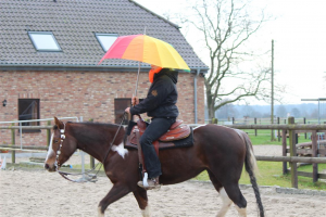 Bestandsaufnahme / EinsschätzungTeam Pferd-Mensch