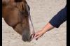 Schnupperstunde Pferdegestuetztes Coaching